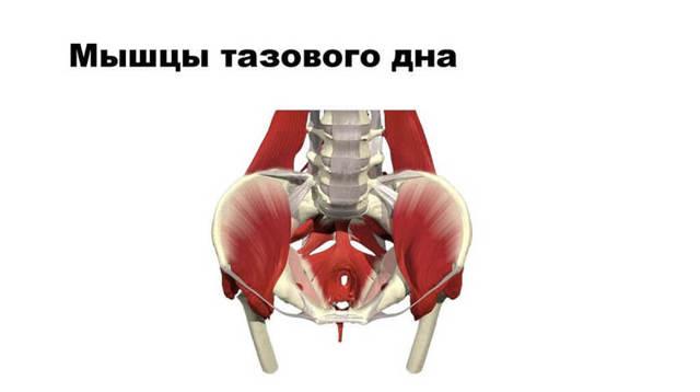 Несостоятельность мышц тазового дна у мужчин и женщин: причины, симптомы, лечение и профилактика