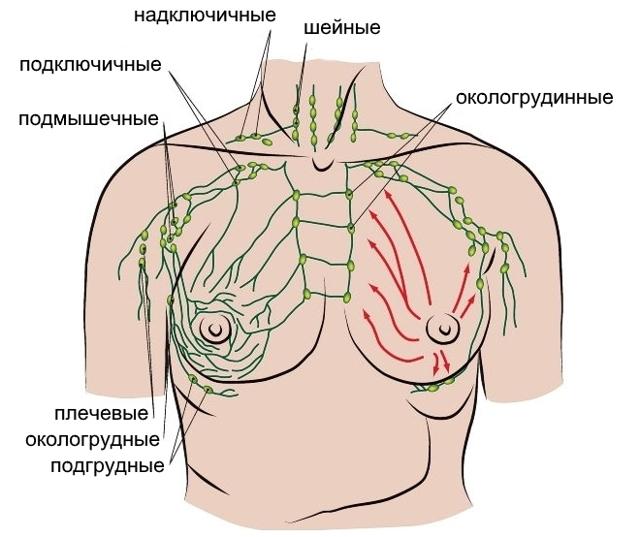 Надключичные и подключичные лимфоузлы: расположение, нормальные размеры, пальпация