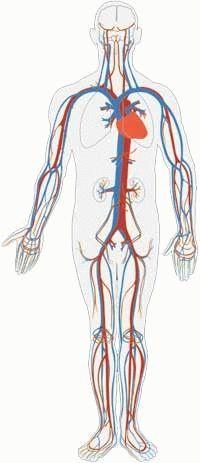 Припухлость на бедре: причины, симптомы и лечение