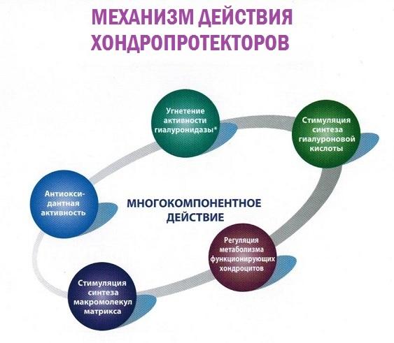 Хондропротекторы для позвоночника: список препаратов нового поколения, цена и отзывы