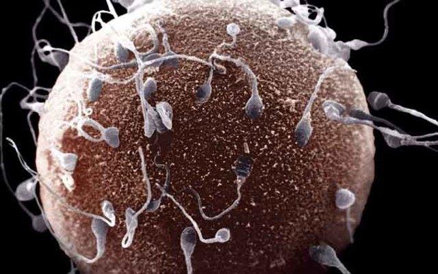 Фертильность у мужчин: что это такое и как повысить индекс