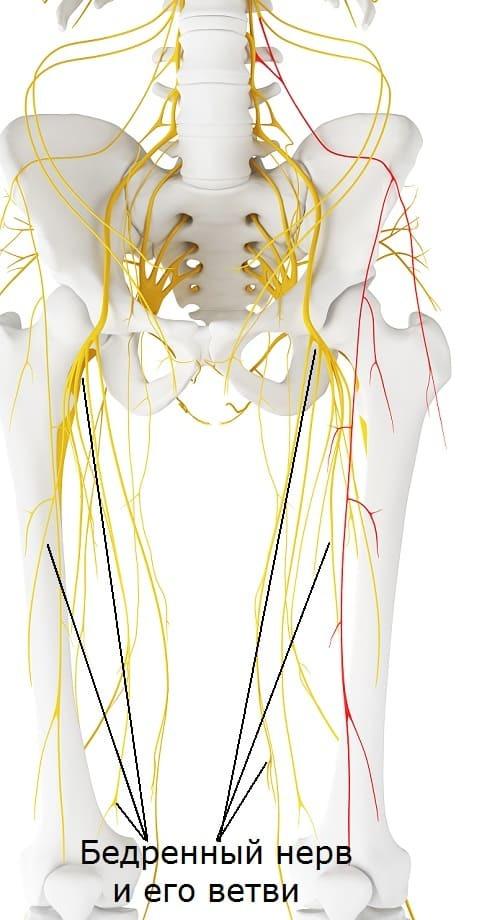 Неврит бедренного нерва: симптомы, постановка диагноза, методы лечения и народная медицина