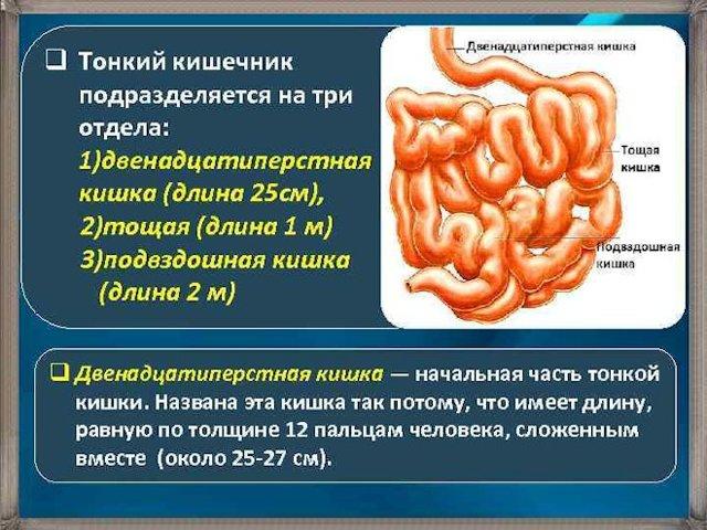 Язва кишечника: симптомы язвы тонкой и толстой кишки, признаки заболевания, методы лечения у взрослых, диета для женщин, проявления язвенной болезни