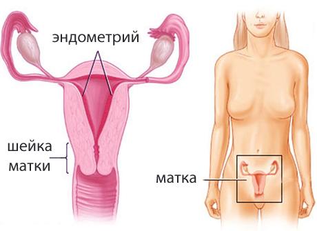 Какой должен быть живот на ощупь на ранних сроках беременности