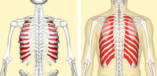 Растяжение межреберных мышц грудной клетки: симптомы и лечение