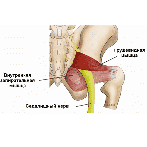 Почему болит бедро у мужчин и женщин по передней поверхности бедра и по внутренней стороне