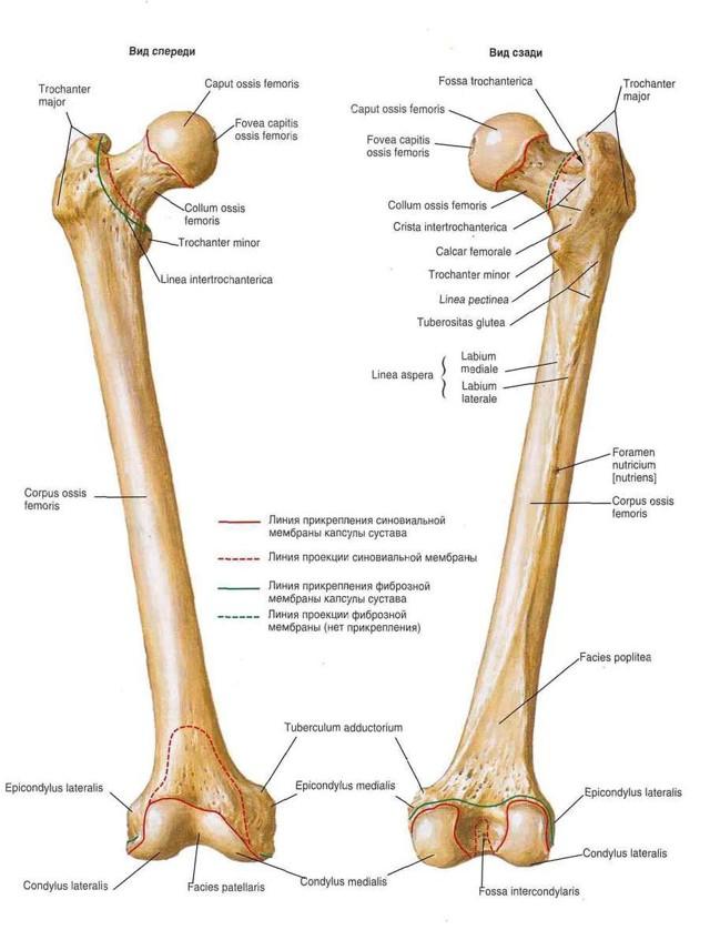 Перелом головки бедренной кости: виды и лечение