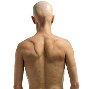 Что такое ромбовидная мышца: функции, где она находится, анатомия