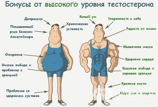 Тестостерон: это что такое у мужчин и где вырабатывается гормон