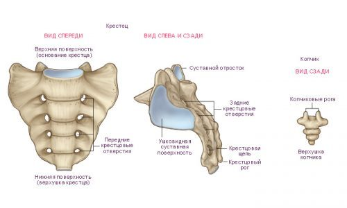 Ортопедическая подушка для копчика: польза, противопоказания, виды и особенности выбора