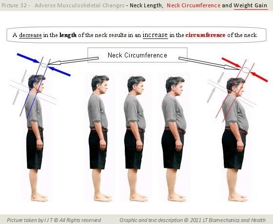 Обхват шеи у детей и взрослых: таблица нормальных размеров окружности шеи
