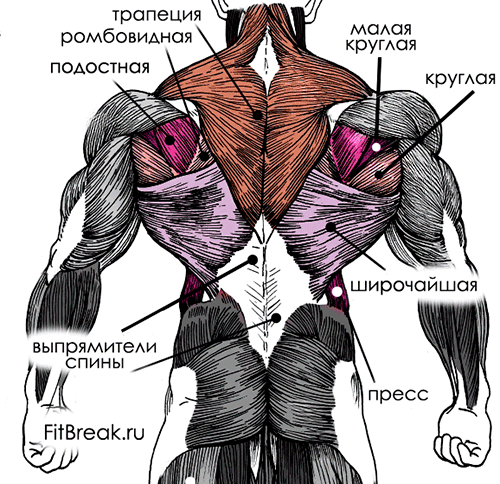 Упражнения на широчайшие мышцы спины для девушек и мужчин: тренировка в тренажерном зале и в домашних условиях