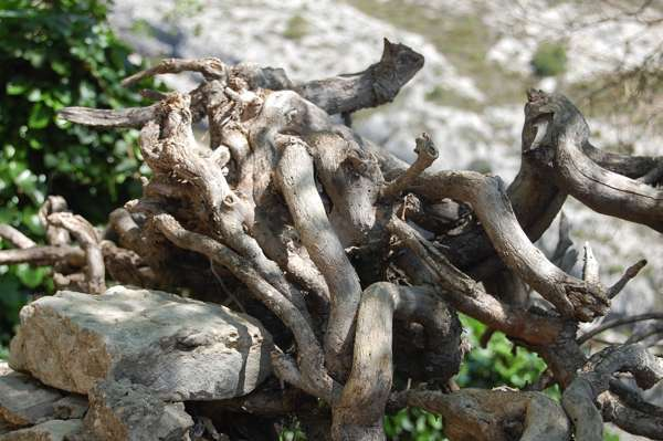 Травы повышающие тестостерон у мужчин в природе: рецепты и настойка женьшеня