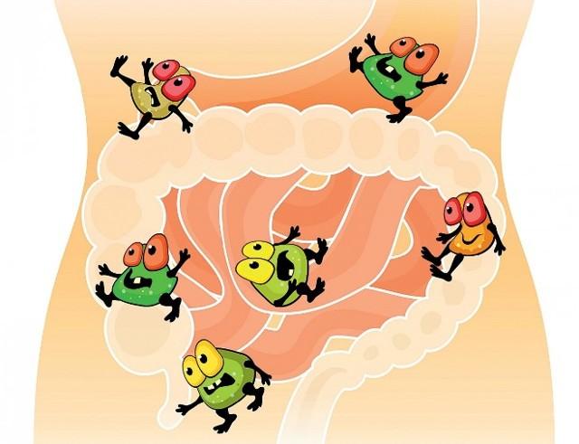 Дисбактериоз кишечника: степени заболевания и способы лечения