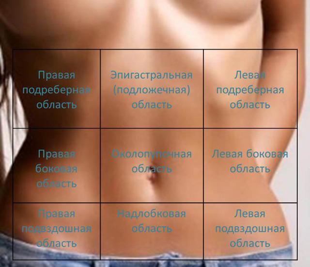 Эпигастральная область у человека: расположение, границы и содержимое
