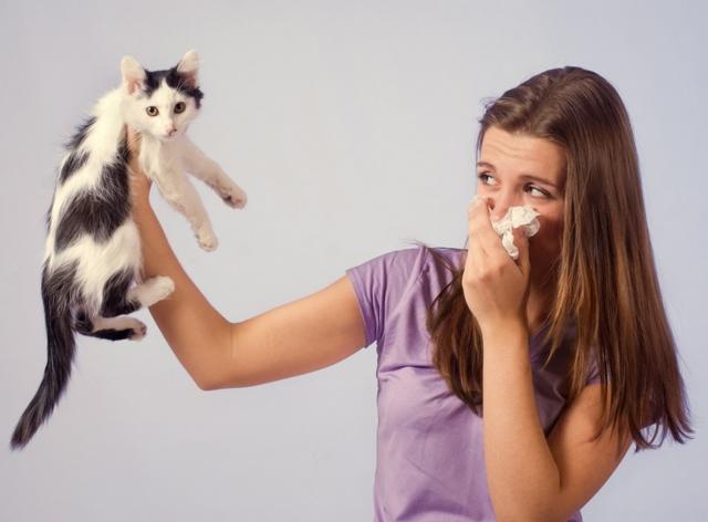 Аллергия на шерсть животных: симптомы, лечение, профилактика