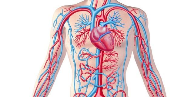 Что такое непрямолинейность хода позвоночных артерий: лечение, симптомы, причины нарушения хода