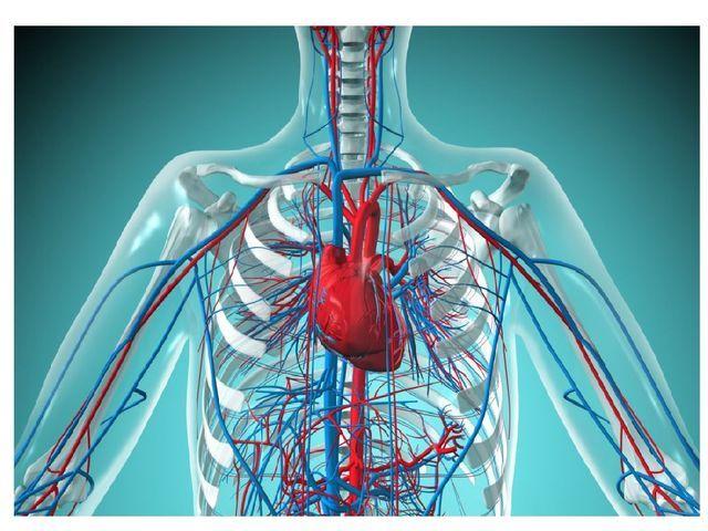 Листья хрена при остеохондрозе: отзывы, рецепты и методы лечения, лечебные свойства хреновых листьев