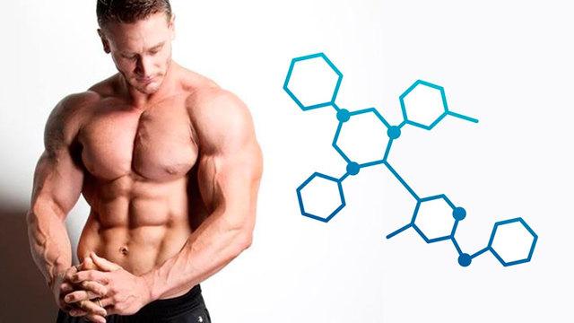 Анализ на тестостерон у мужчин: как сдавать и определить уровень, расшифровка