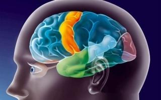 Ирритация структур головного мозга (раздражение) и её признаки