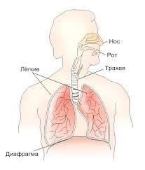 Спазм и боль в диафрагме: причины, симптомы, лечение
