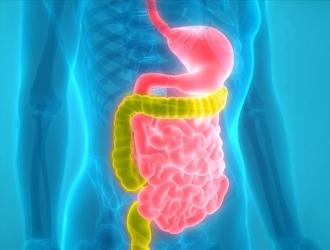 Лечение СРК с диареей: медикаменты, диеты и народная медицина