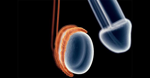 Одно яичко ниже другого у мужчин: левое или правое, норма и как должно быть