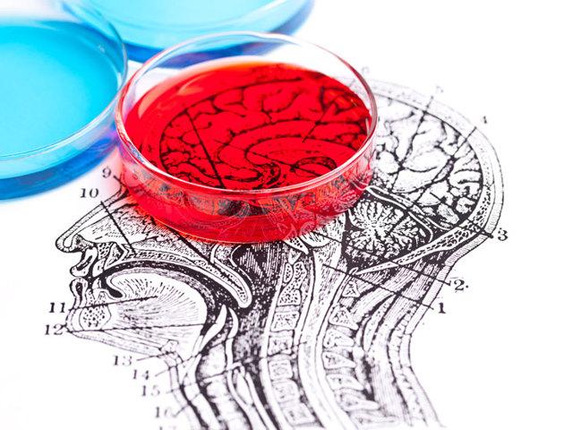 Исследование спинномозговой жидкости, ее состав и функции