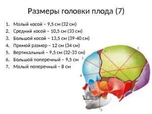 Размеры головки плода: малый, средний и большой косой, прямой и поперечный размеры головки зрелого плода