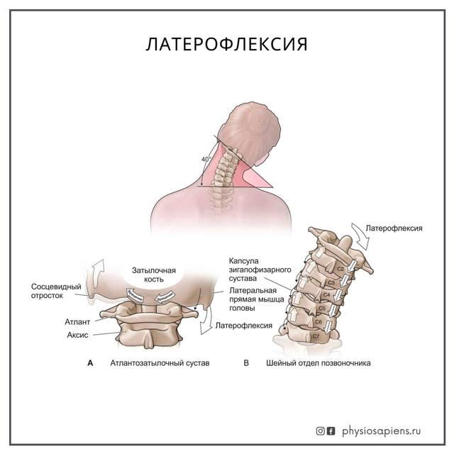 Атланто-затылочный сустав: мышцы, действующие на сустав, передняя и задняя атланто-затылочные мембраны, латеральная атланто-затылочная связка, анатомия сустава