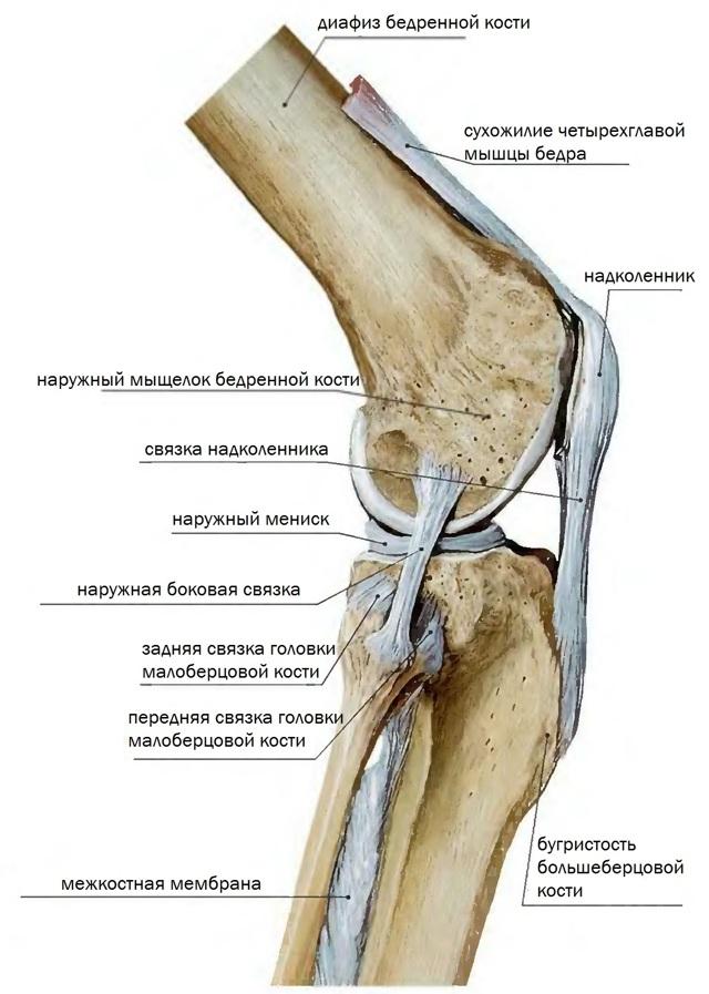 Тендинит коленного сустава, собственной связки надколенника и воспаление сухожилий и связок колена