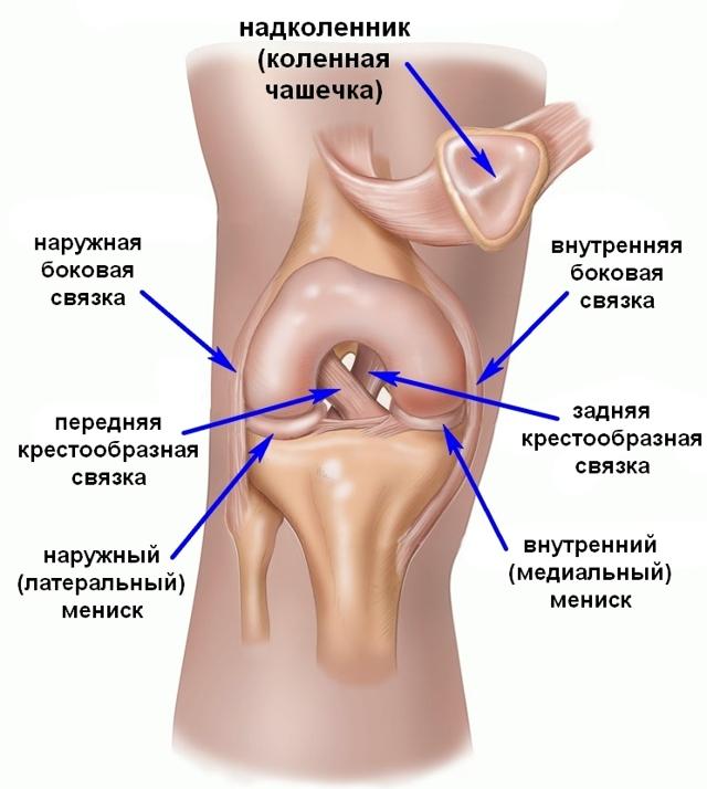 Анатомия связок коленного сустава: малоберцовая и большеберцовая (медиальная) коллатеральные, подколенная, поперечная