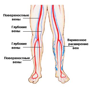 Вены голени и их анатомия: суральные, большеберцовая, глубокие, малоберцовая, поверхностные и медиальная