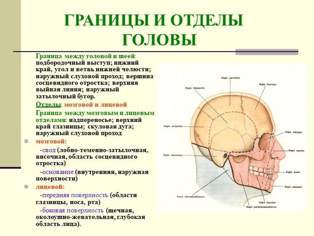 Трепанационный треугольник Шипо: топографическая анатомия, границы и практическое значение, чем ограничен треугольник сзади