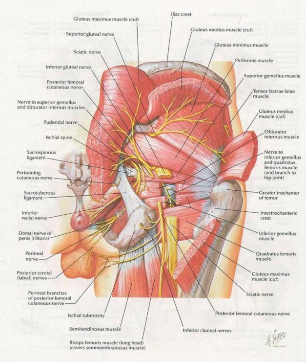 Анатомия, топография и кровоснабжение подколенной ямки