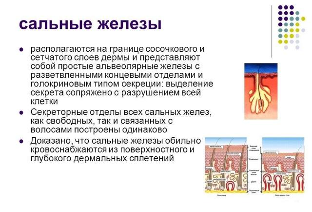 Сыпь на голове у ребенка: под волосами, на лице и теле, на затылке. прыщи с белыми головками, высыпания после температуры