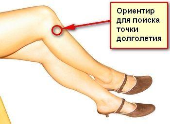 Точка долголетия на ноге под коленной чашечкой и её массаж