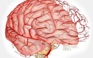 Упражнения для головы: наклоны вперед, назад, вправо, влево, круговые движения, вращение головой, гимнастика для головы и сосудов мозга