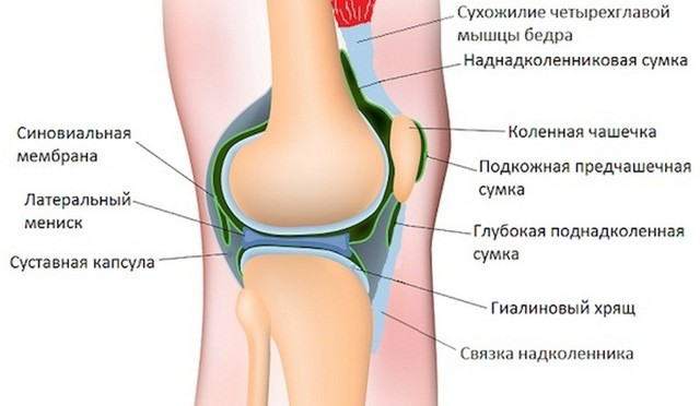 Синдром медиопателлярной складки коленного сустава: код МКБ-10, симптомы и лечение утолщения